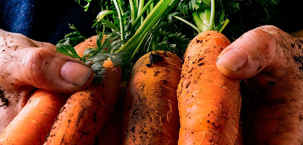 Solo lo mejor de las verduras