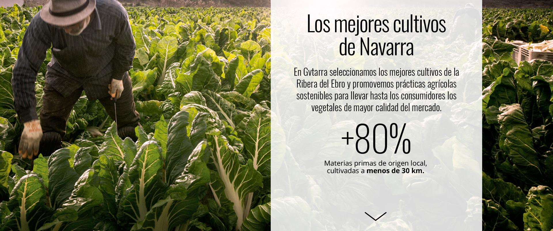 Los mejores cultivos de Navarra