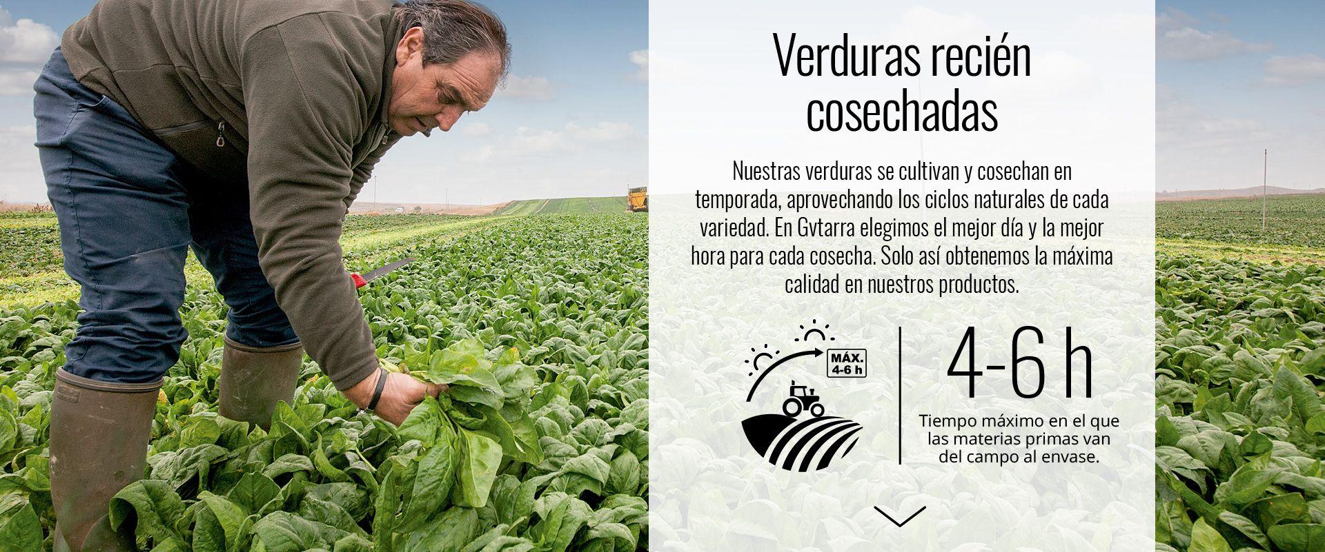 Verduras recién cosechadas